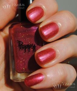 Ruby White Tips Poppy